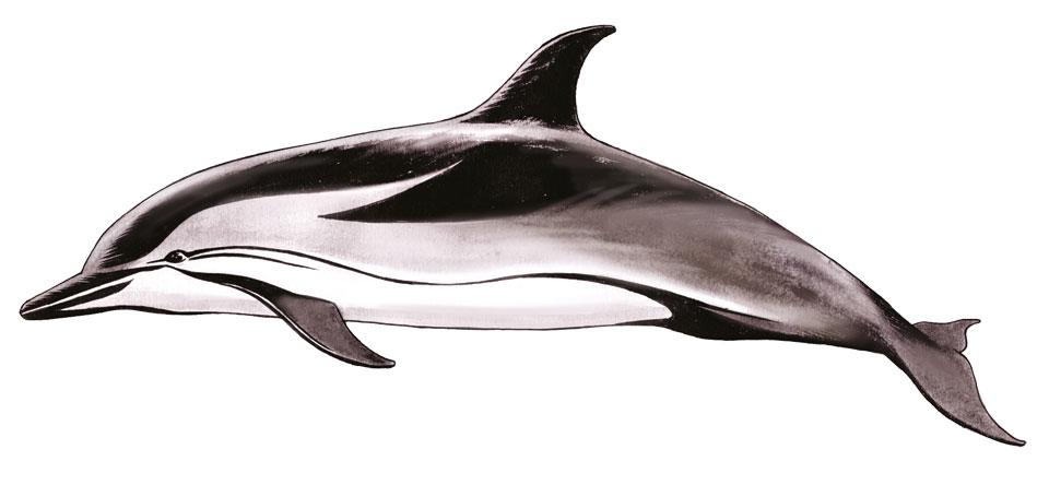 Δελφίνια στις Ελληνικές θάλασσες